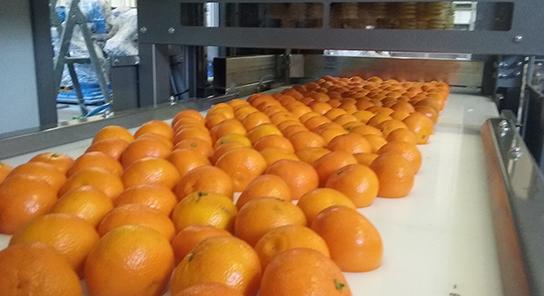 Aisha, Encajadora de fruta compacta 07