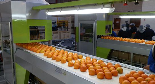 VRK Encajadora automatica de fruta 10